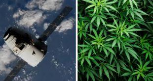 """""""ایلان ماسک"""" تصمیم دارد گیاه ماریجوانا به ایستگاه فضایی بینالمللی ببرد"""